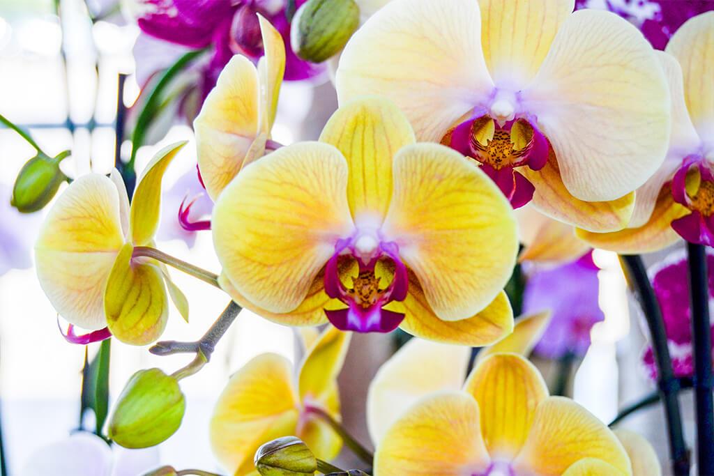 Dicas para Cuidar de Orquídeas - Luminosidade