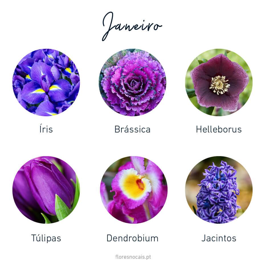 Flores do mês de Janeiro: Íris, Brássicas, Helleborus, Tulipas, Dendróbios e Jacintos.