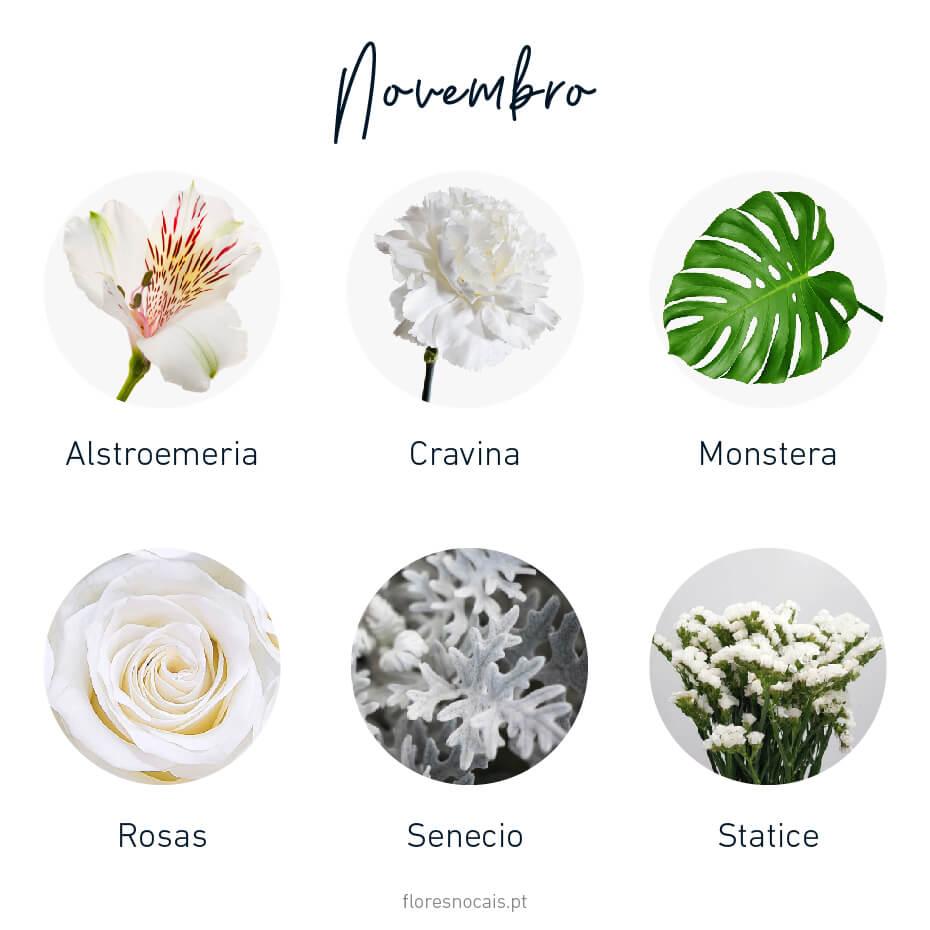 Flores do mês de Novembro: Alstroemeria, Cravina, Monstera, Rosas, Senecio e Statice.