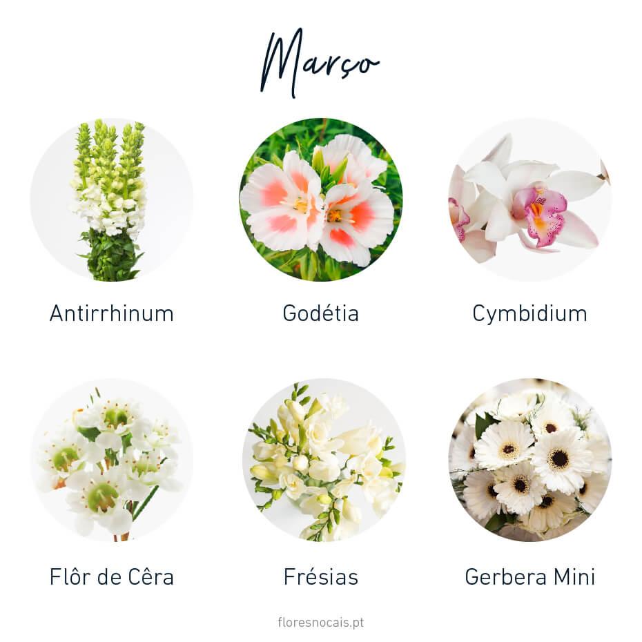 Flores do mês de Março: Antirrhinum, Godétia, Cymbidium, Flor-de-Cêra, Frésias e Gerbera Mini.