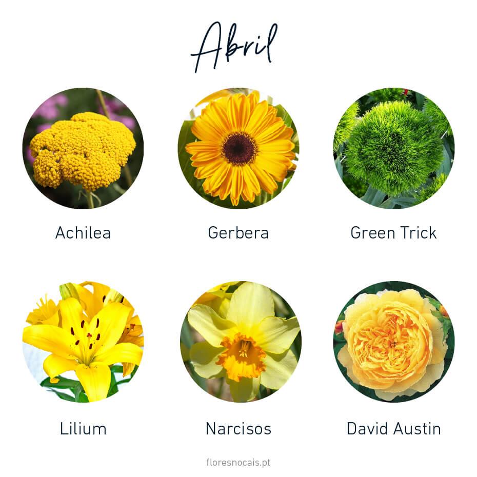 Flores do mês de Abril: Achilea, Gerbera, Green Trick, Lilium, Narcisos e Rosas David Austin.