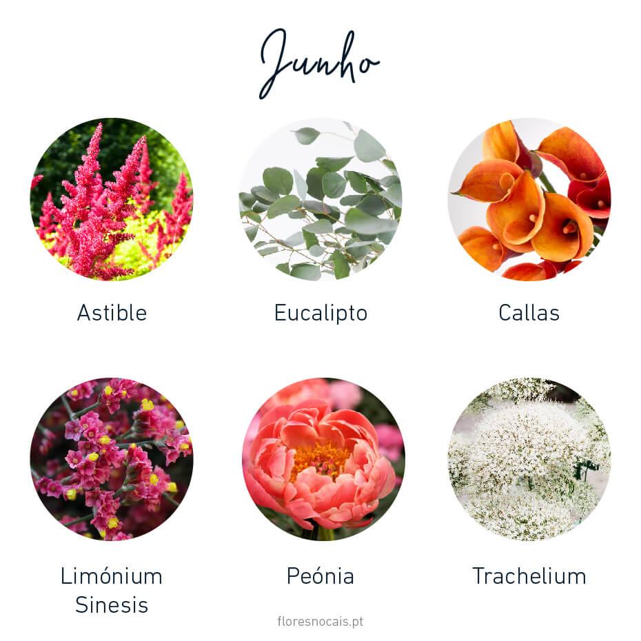 Flores do mês de Junho: Astible, Eucalipto, Callas, Limónium Sinesis, Peónias e Trachelium.