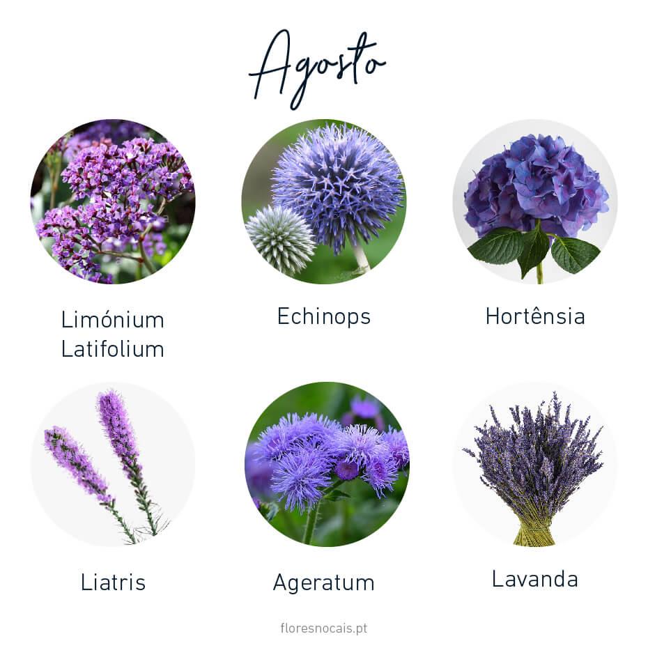Flores do mês de Agosto: Limónium Latifolium, Echinops, Hortênsia, Liatris, Ageratum e Lavanda.