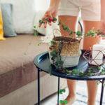 5 dicas para cuidar da sua Ceropegia Woodii