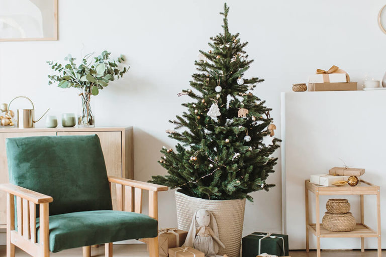 Pinheiro de Natal Natural: Onde comprar, cuidados e curiosidades