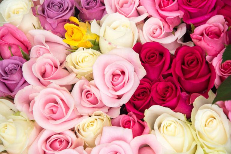 As cores das Rosas e os seus significados