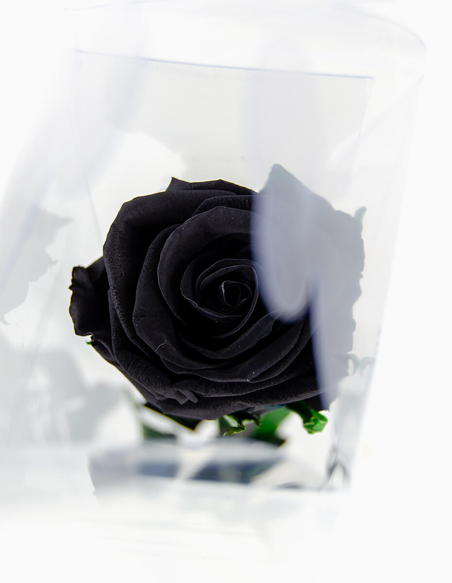 Rosa Preta Preservada