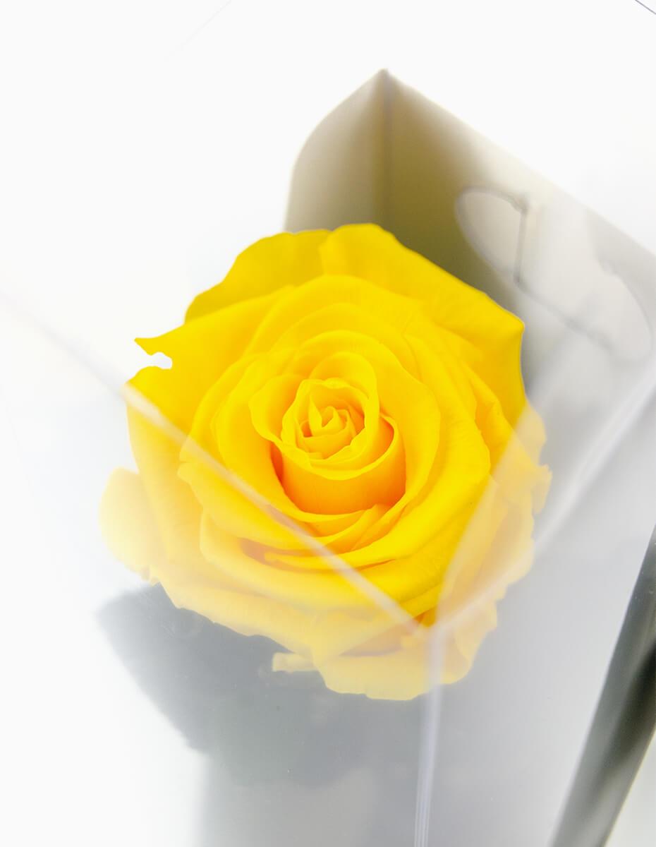 Rosa Amarela Preservada